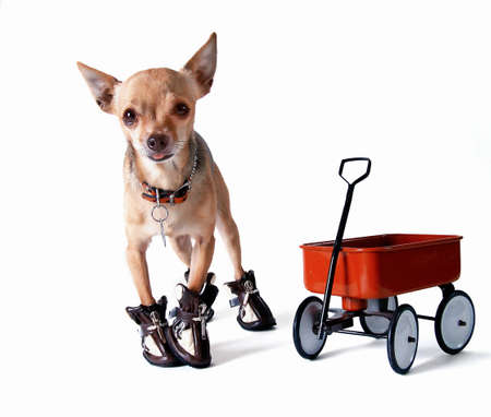 mutt: Little Red Ridng Dog Stock Photo