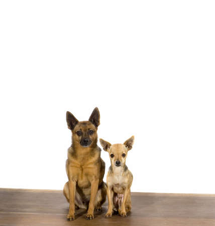 buddies: Dog buddies Stock Photo