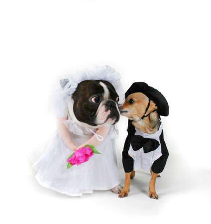 Doggy Marriage photo