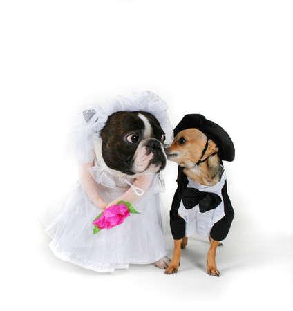 Doggy Marriage Reklamní fotografie