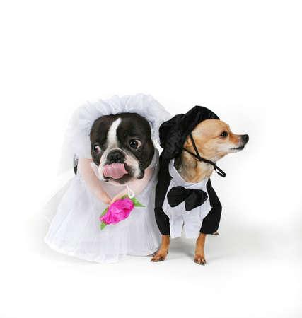 Unión De Doggy