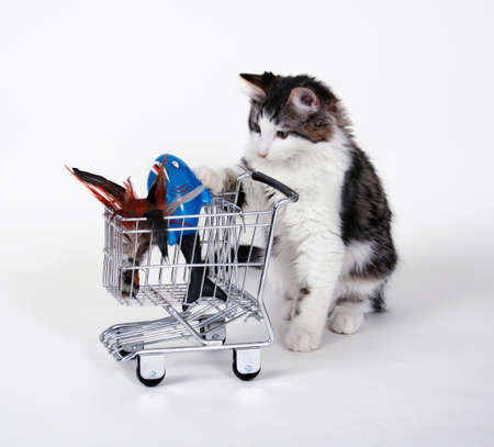 consumer: Kitten with shopping cart