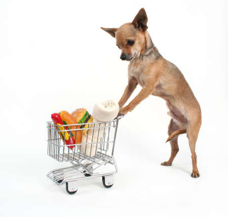 pet store: a tiny chihuahua shopping for groceries