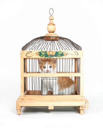 locked: a tiny kitten in a ornate bird cage