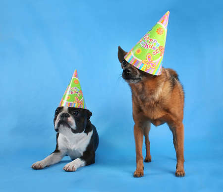 two dogs posing with birthday hats on photo