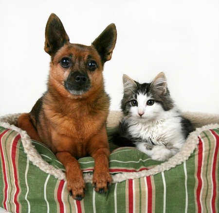 to cuddle: a dog and a kitten in a pet bed Stock Photo