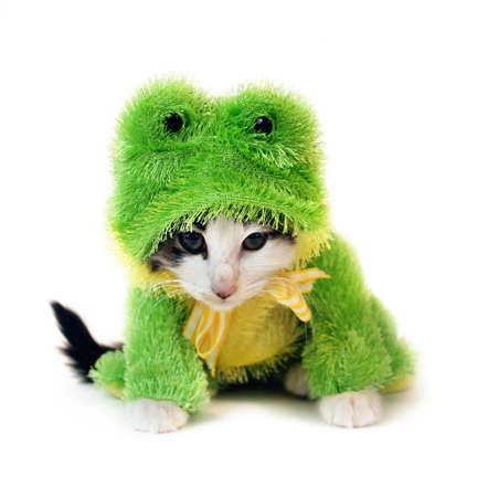 renacuajo: un gatito en un traje rana  Foto de archivo