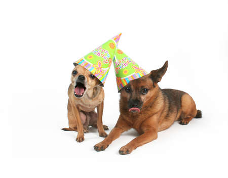 two dogs with birthday hats on their heads photo