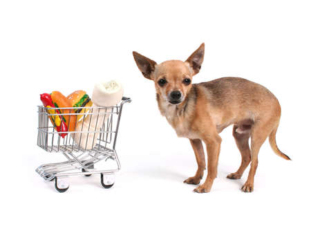 shopping cart: tiny chihuahua with a shopping cart Stock Photo