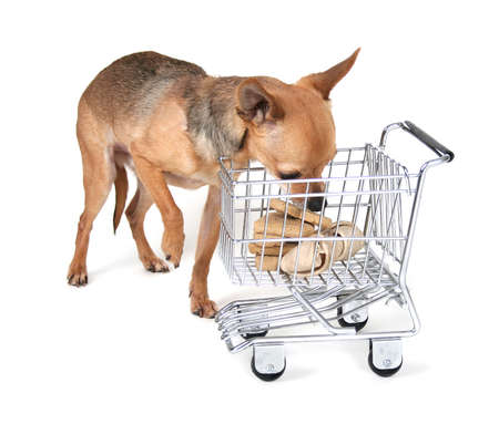 a tiny chihuahua with a shopping cart photo