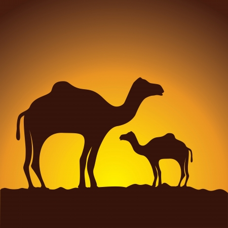 humped: caravan of camels, vector image design Illustration