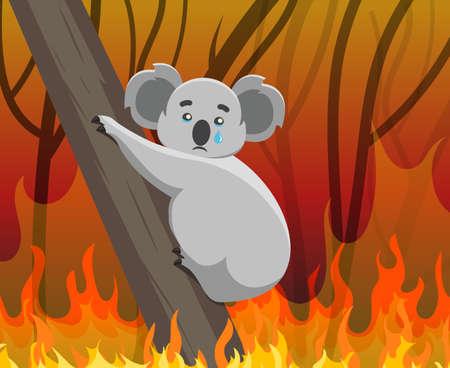 Ecological disaster in Australia. Fires in the habitats of koalas. Imagens - 137731592