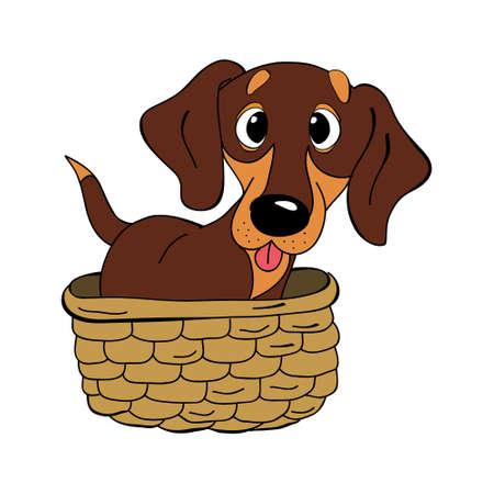 Dachshund dog breed vintage vector illustration.