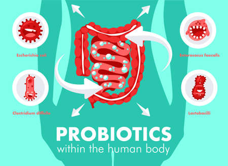Intestinal flora gut health vector concept with bacteria and probiotics icons. Human flora good and bad microorganism illustration