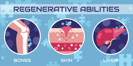 Regenerative medicine, vector illustration concept Ilustracje wektorowe