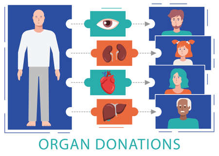 Organ donation flat vector illustration shows a process of organ donation when