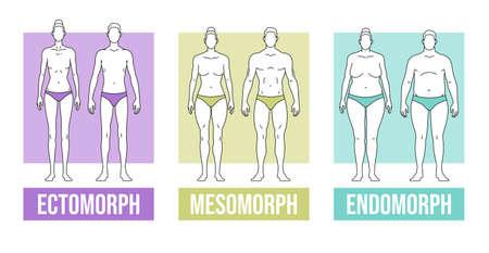 Body types flat vector illustration and endomorph Ilustracja