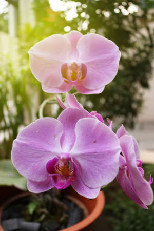 Orchid flower, flower of indonesia, plant of indonesia, flower of asian, indonesia | Asian Imagens