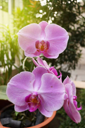 Orchid flower, flower of indonesia, plant of indonesia, flower of asian, indonesia | Asian 版權商用圖片