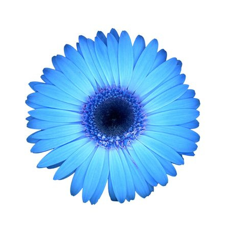 blue backgrounds: blue daisy