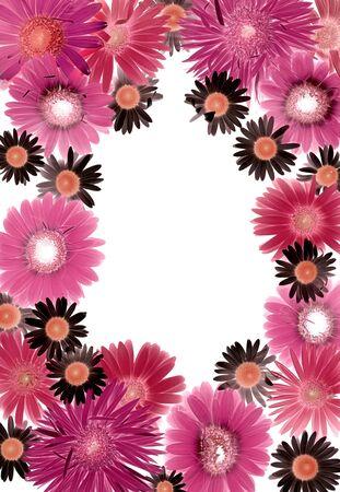 colorized: Gerbera daisy design