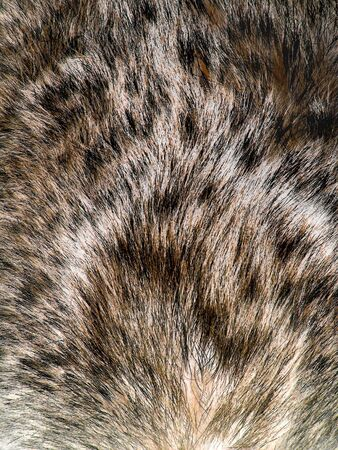 Animal fur texture Stock Photo