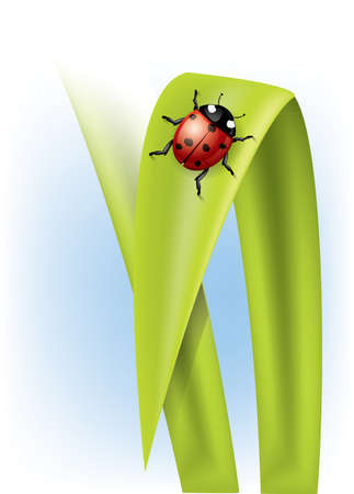 Ladybug on grass Stock Vector - 9441035