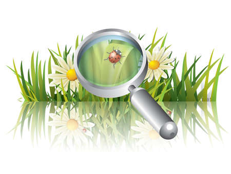 flower fields: Green grass with ladybug Illustration