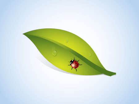 background with leaf and ladybug Stock Vector - 21419658