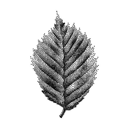 Grabado de abedul a mano de la hoja dibujada ilustración vectorial Ilustración de vector