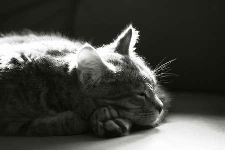 sleepy kitten close up