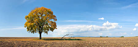 landscape with a lonely tree