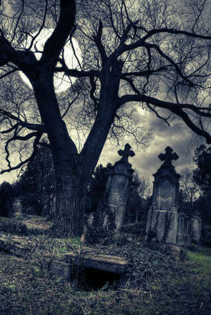 spooky tree: gothic scene with opened tomb moon