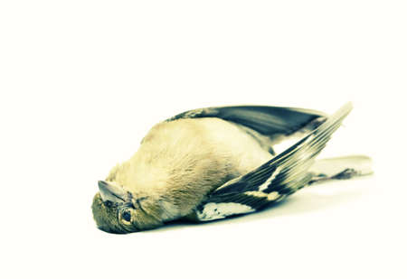 isolated dead bird acidic version