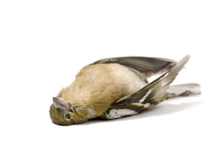 dode bladeren: geïsoleerde dode vogel