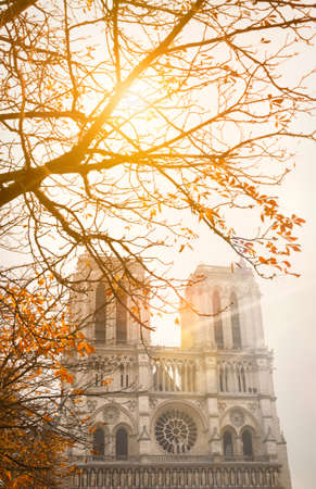 Notre Dame Cathedral, Paris, with autumn sunshine through the branches of a tree Reklamní fotografie