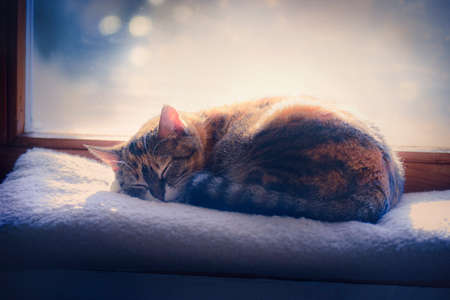 kitten taking a nap on the windowsill in sunshine Standard-Bild