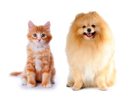 Cat and dog red color sitting isolated on white background photo
