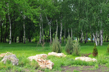 grass plot: Summer scenery with  grass plot, stones and birches Stock Photo