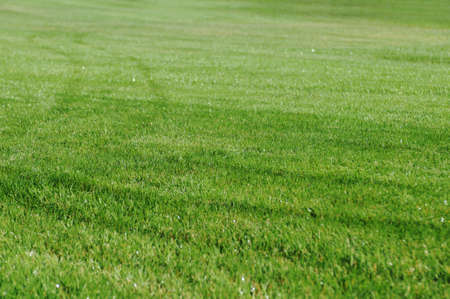 spaciousness: Green lawn with nobody. Can be used like background.