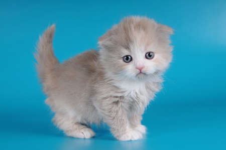 Little fluffy kitten on blue background photo