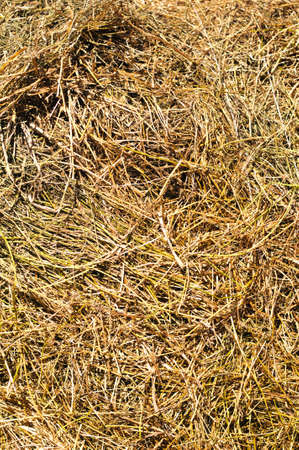 haulm: Hay or haulm background clouseup