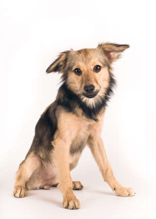 breed: Cute mixed breed dog portrait at studio