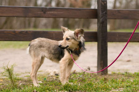 fullbody: Stray mixed breed dog standing portrait outdoor Stock Photo
