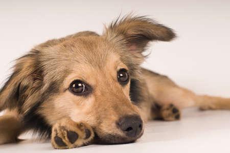 Mixed breed dog sad portrait at white background