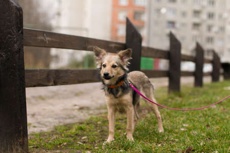 stray: Stray mixed breed dog standing portrait outdoor Stock Photo
