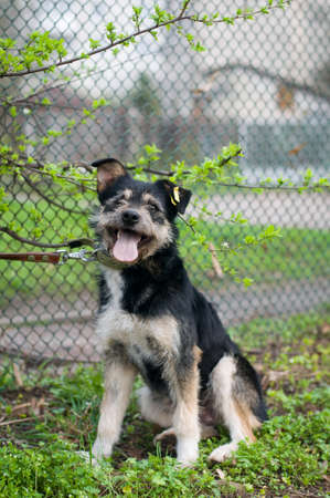 fullbody: Mixed breed dog portrait outdoor sitting on green grass