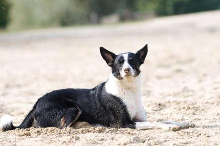 mixed breed: Mixed breed dog portrait Stock Photo