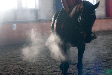 exhale: Horse portrait exhale in manege with backlight and no people