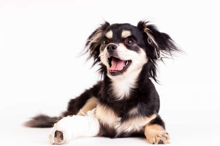 Cute little six month mixed breed dog on white background at studio Banque d'images